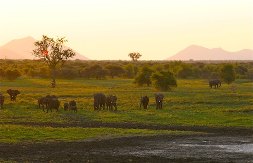 african landscape elephants
