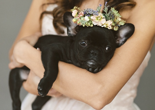 flower dog collar for wedding